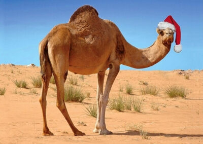 Christmas in morocco